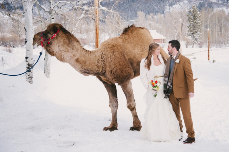 camel at wedding